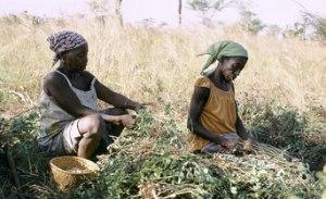 ida-burkinaFaso-pho-agriculture