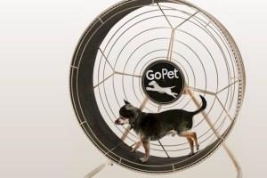 treadwheel-ruota-per-cani